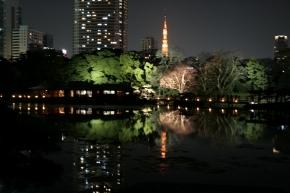 日本庭園と高層ビルがなんだか不思議~