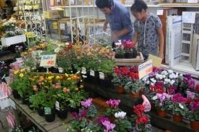 お花を物色するダーリンとナナ